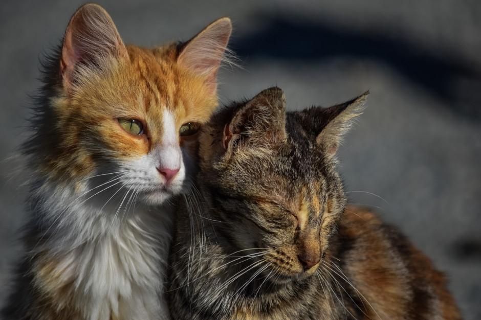 Uchwały o ochronie zwierząt do poprawy. Wojewoda wytyka błędy