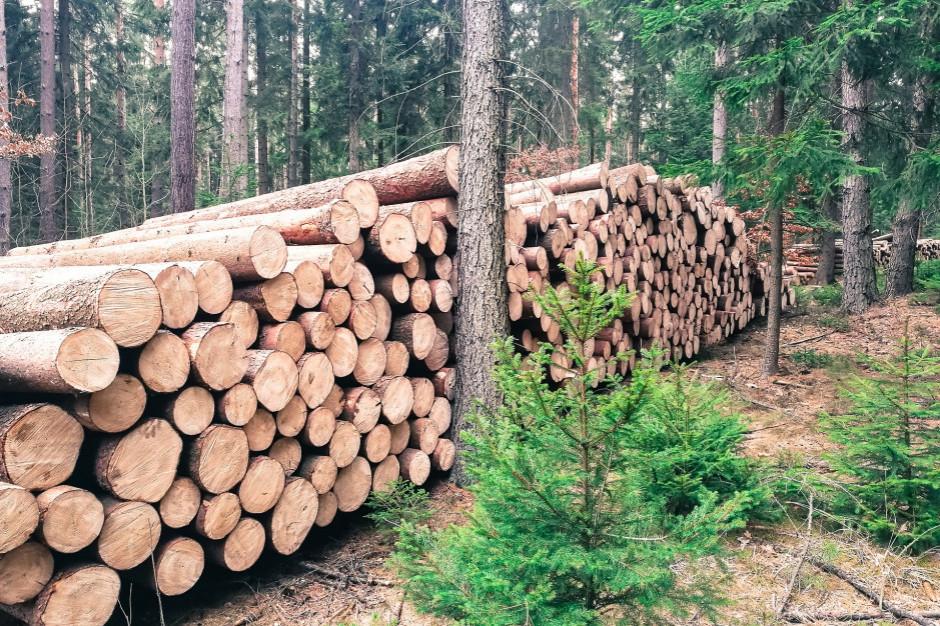 NIK: Powiaty nie mają kontroli nad gospodarką w lasach