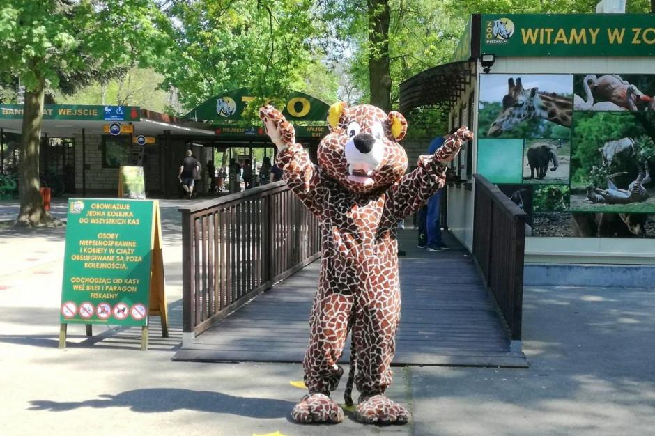 Poznańskie zoo znów otwarte dla odwiedzających