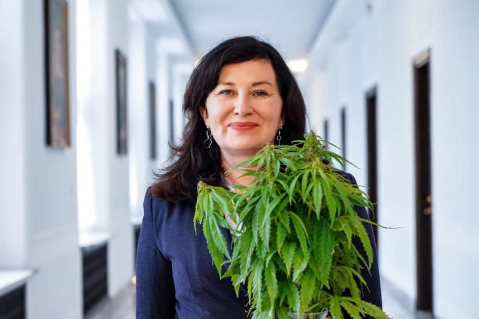 Marihuana będzie legalna? Do Sejmu trafił pakiet ustaw