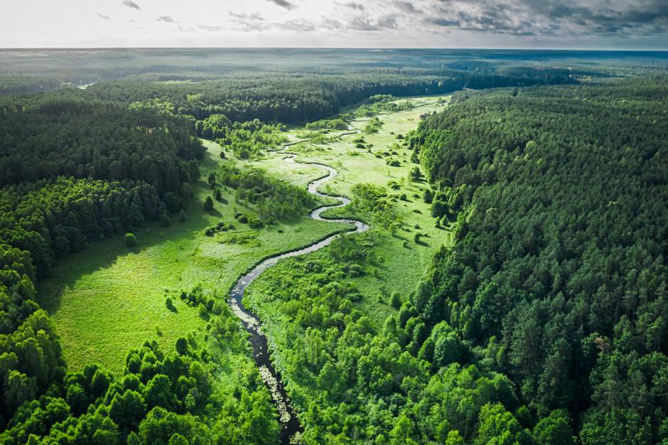Jak poprawić stan środowiska w Polsce? Oto 5 kluczowych problemów
