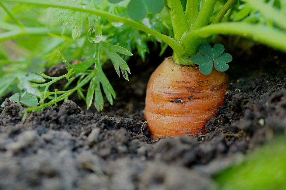 Łódź pomoże mieszkańcom zakładać ogrody warzywne
