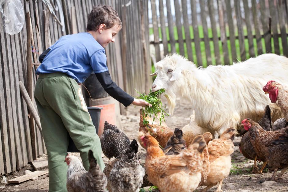Zasiłek opiekuńczy dla rolników ma być przedłużony