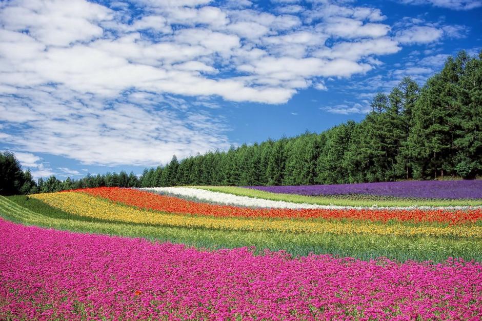 Studenci będą badać kwietne łąki w miastach