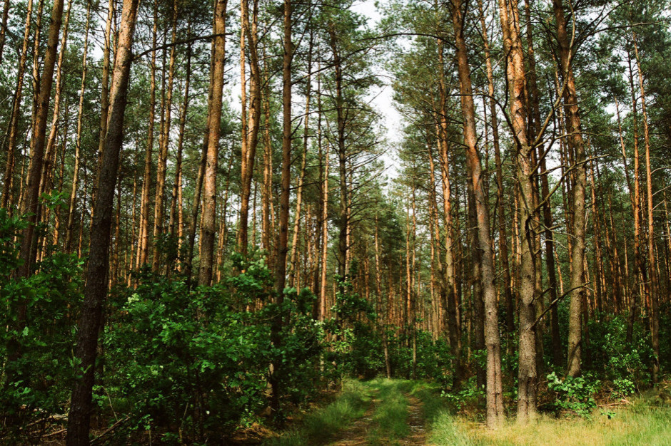 PiS wycofało projekt ws. lasów, ale nie składa broni