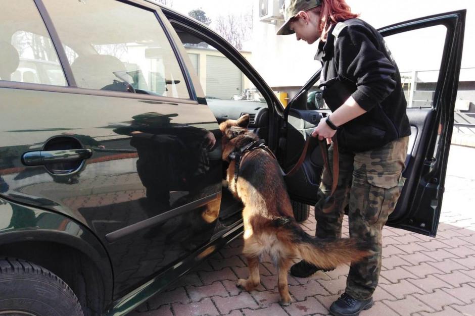 Straż Graniczna szuka psów do służby