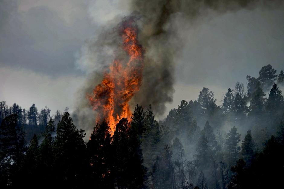 Duże zagrożenie pożarowe w województwach. IBL wydał alert