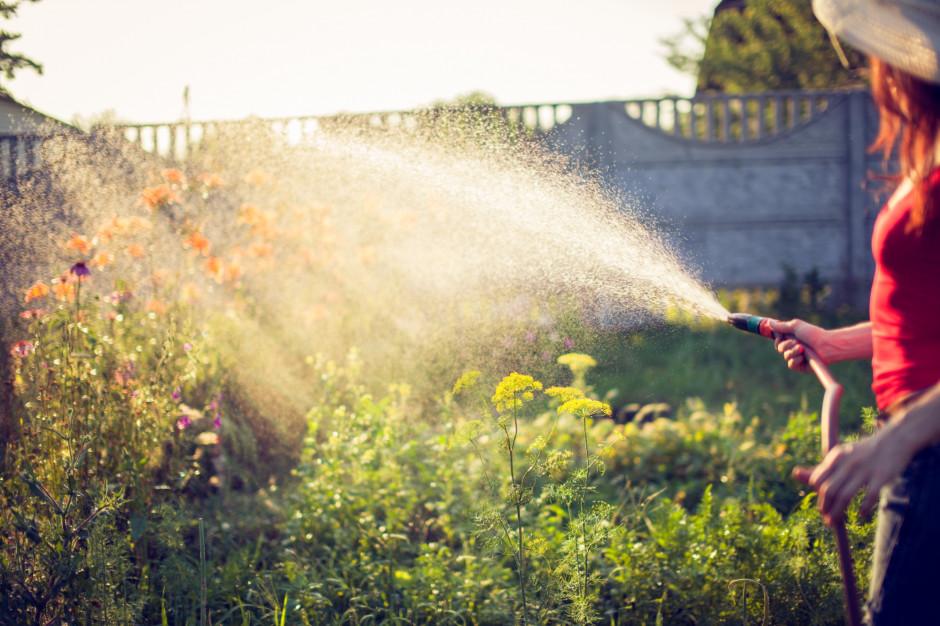 Zaczyna brakować wody - gminy wprowadzają zakazy podlewania