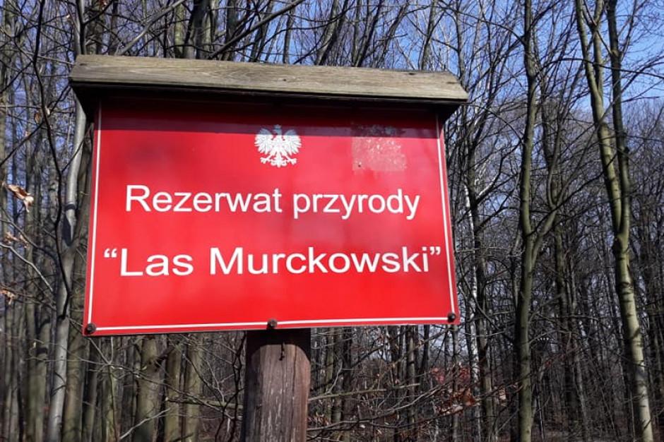 Katowiccy radni powołali zespół przyrodniczo-krajobrazowy w Lesie Murckowskim