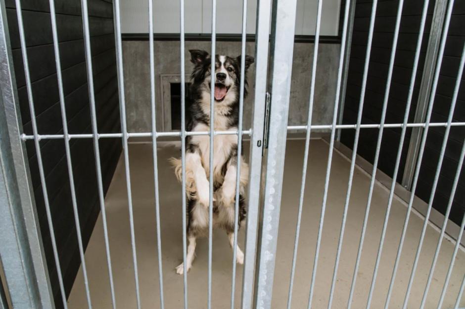 Poznańskie schronisko opuścił ostatni pies [VIDEO]