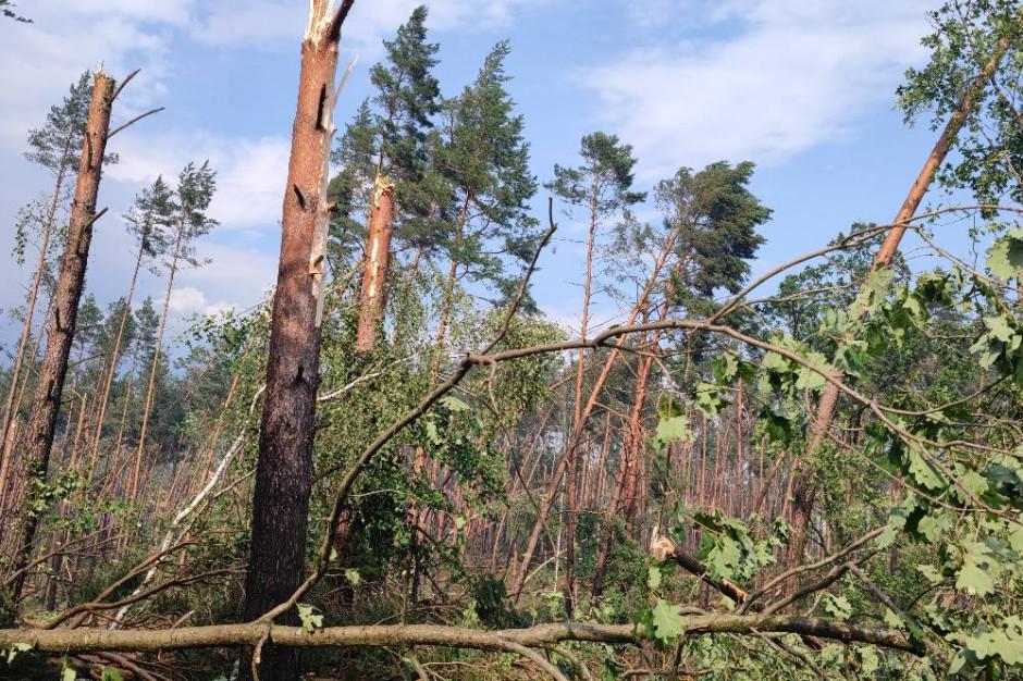 Leśnicy szacują straty w Borach Tucholskich po przejściu trąby powietrznej