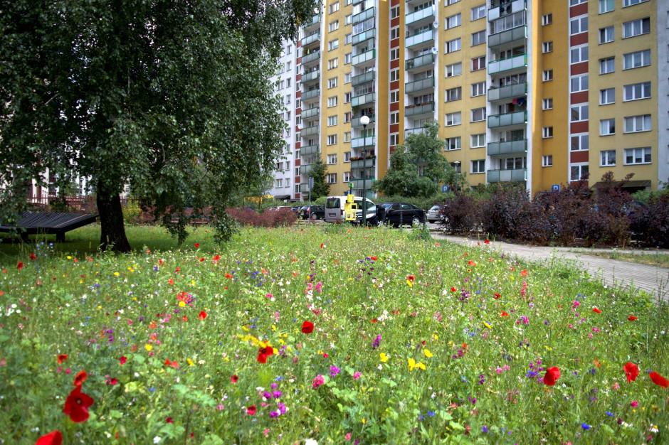 Miasta idą na rekord. Rośnie areał kwietnych łąk