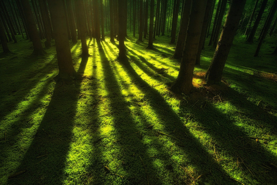 Senackie komisje za odrzuceniem ustawy o gruntach leśnych