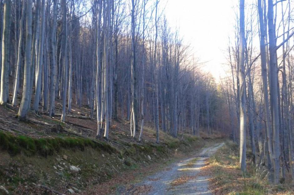 Drzewa umierają przez rowerzystów