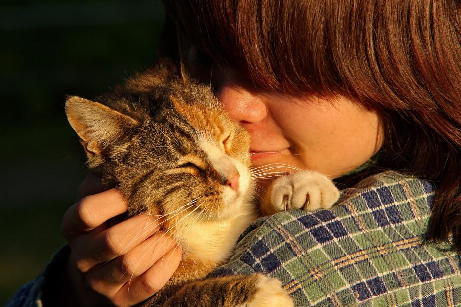 Społeczny opiekun kota ze specjalną legitymacją. W Poznaniu trwa nabór