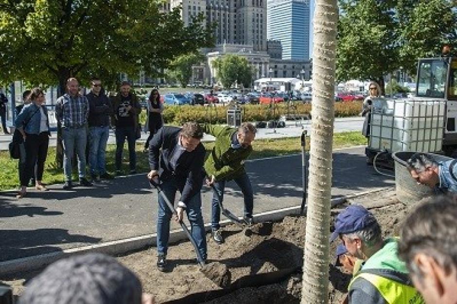 Warszawa: Do końca roku w centrum stolicy zostanie posadzonych 118 dużych drzew