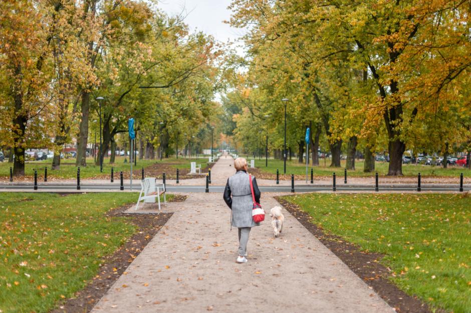 Warszawa wdraża Kartę Praw Drzew. Miejskie jednostki będą uprzedzać o wycince