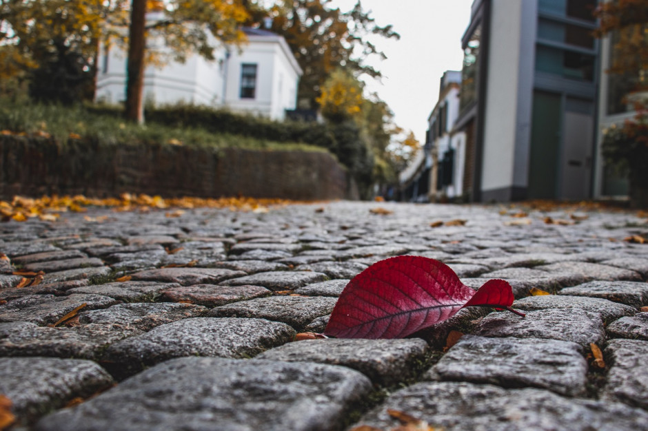 W Poznaniu rusza akcja odbioru liści
