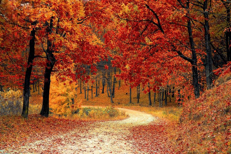 Nadchodzi astronomiczna jesień