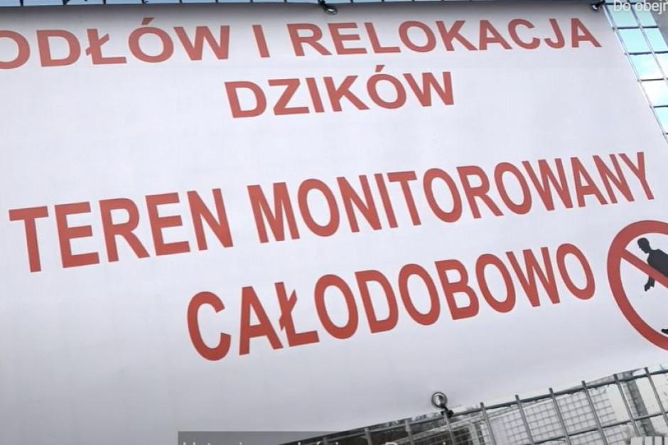 Krakowscy radni apelują o zwiększenie w mieście liczby odłowni dzików