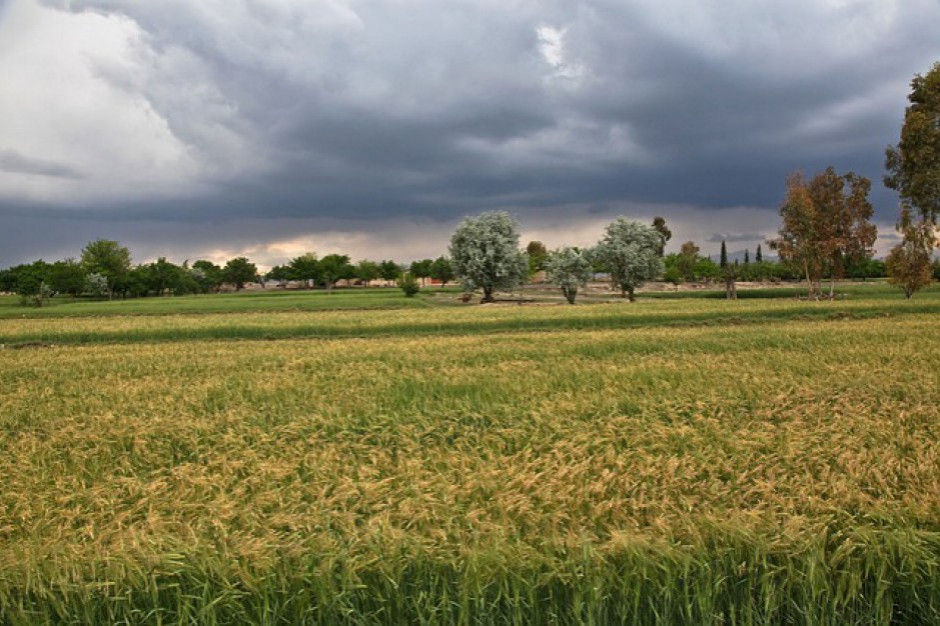 Pogoda na najbliższe dni: będzie cieplej i deszczowo
