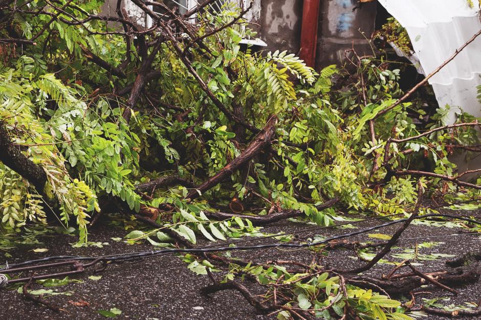 Połamane drzewa i utrudnienia na drogach po wichurach
