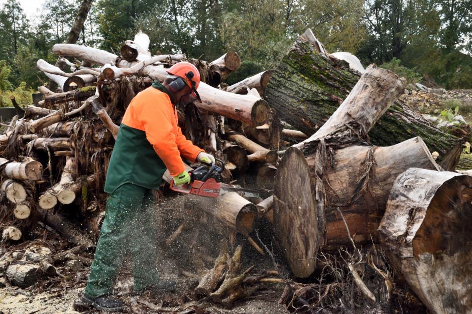 Rozdają biednym drewno z komunalnych wycinek. Choroszcz daje przykład
